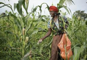 País poderá contar com uma fábrica de fertilizantes a partir do próximo ano