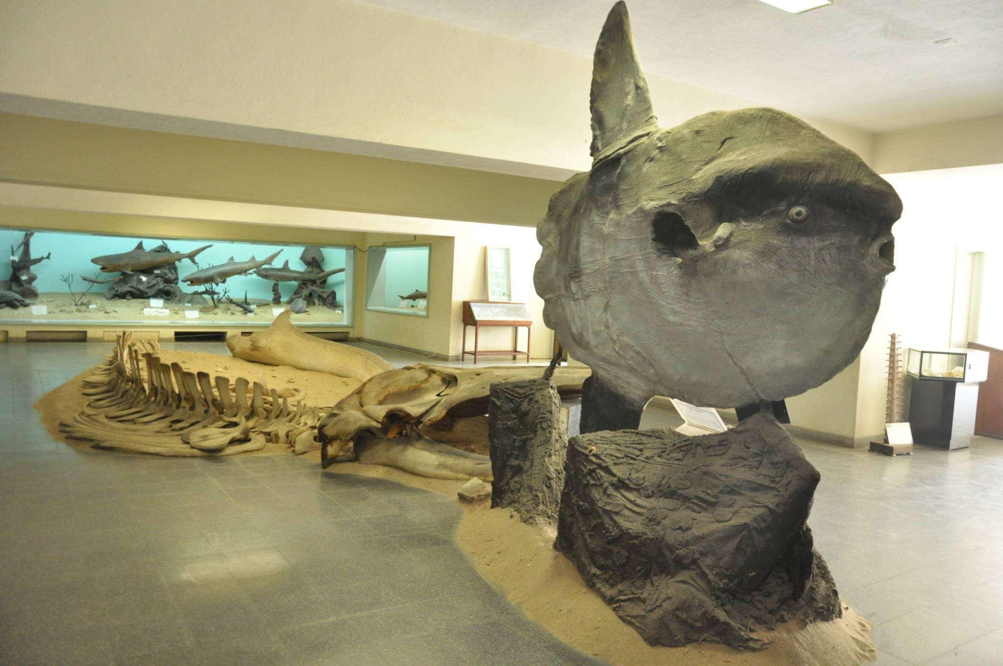 Image result for Museu Nacional de História Natural de Angola